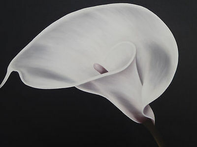 """Calla Lily"" Still Life Flower Bloom Fleur Acrylic Paintings Canvas Artwork"