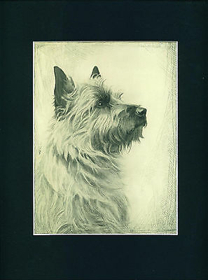 Dog Art Print 1935 Cairn Terrier VINTAGE comes matted Ready to Frame