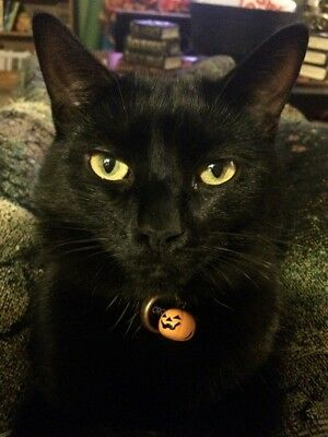 Cat collar bell charm tag / pumpkins aren't just for Halloween / ring attached