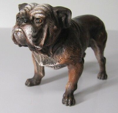 Cold painted Bronze Signed Geschutzt  Antique Austrian Bull Dog