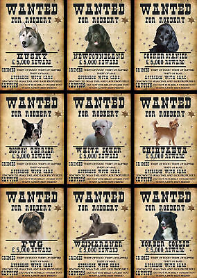 Beware Of The Dog Signs Wanted Various Breeds set3