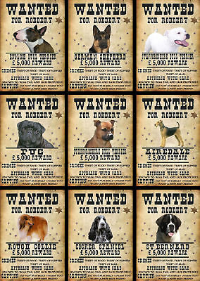 Beware Of The Dog Signs Wanted Various Breeds set4