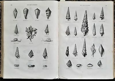 1866 antique BOUND illus NATURE full year french ENGRAVINGS butterfly shell +++
