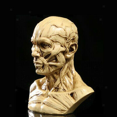 Human Anatomical Anatomy Skeleton Medical Teaching Model Decor Crafts Yellow