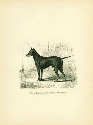Dog Print 1878 Manchester Terrier Dog ANTIQUE