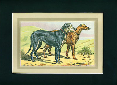 Dog Print 1931 Scottish Deerhound Dogs by Mahler