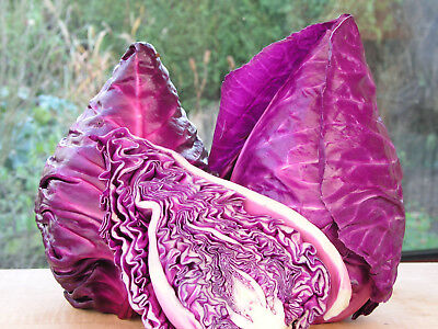 Sweet Salad Raw Food Cabbage Kalibos Purple Amazing Colour + Flavour 100 Seeds
