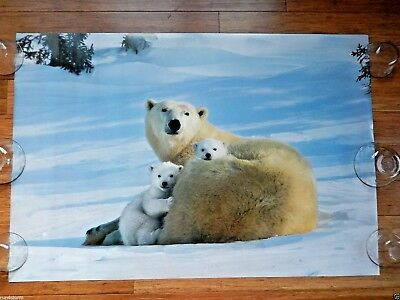 """Polar Bear Mother with two Cubs 39"""" x 26 ½"""" Poster"""