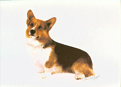 Tri Pembroke Welsh Corgi Print by Alan Jachinski SIGNED