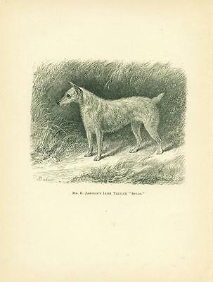 Irish Terrier Dog Print 1882 Antique