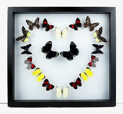 Mounted real butterflies; butterfly collection; framed art; LOVE; UNIQUE GIFT