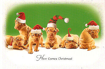 Shar Pei Sharpei Santa Hat Christmas Cards - Box of 18