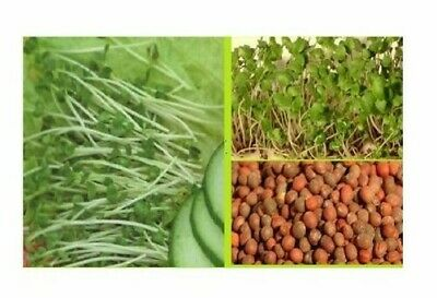 650x Broccoli Cress Organic Sprouts Seeds Herbs - - #198