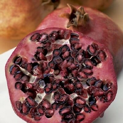 Pomegranate Provence Edible Fruit Bush Punica Granatum Outdoor Garden Plants 3L