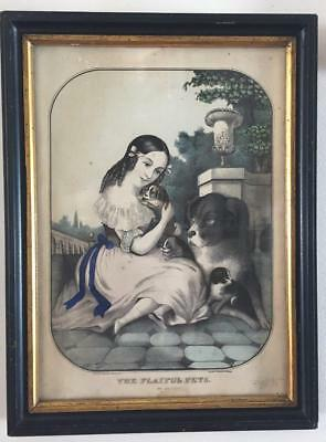 Antique 1800s PLAYFUL PETS J Baille BERNESE MOUNTAIN DOG Framed Lithograph Print