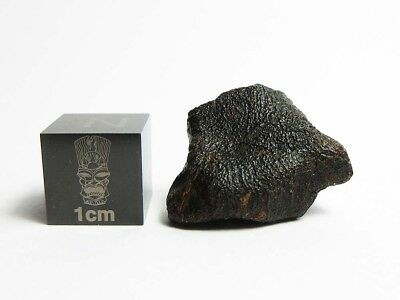 Camel Donga Euc Meteorite 3.84g Gorgeous Glossy Crusted Stone w/ Flowlines