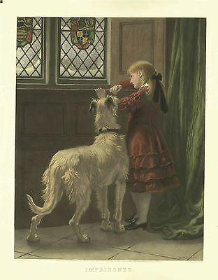 Irish Wolfhound Print by Briton Rivere, Imprisoned