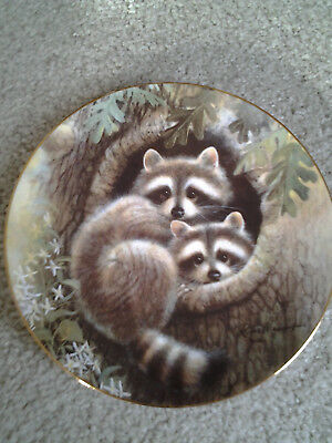Raccoons In Hideaway Hollow Woodland Babies Collectors Plate 1994 Hamilton Coll