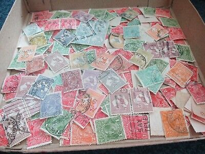 ESTATE: Kangaroo and KGV in box - unchecked unsorted HEAPS so much here (6261)