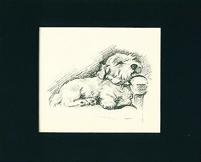 Dog Print 1937 Sealyham Terrier on Chair by Lucy Dawson VINTAGE