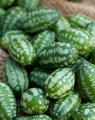 Vegetable  Cucamelon   10 Finest Seeds