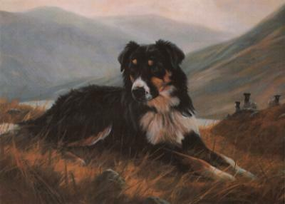 Border Collie Notecards: Tri Colour Collie by John Trickett - Pack of 5