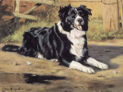 Border Collie Note Card: Anticipation by John Trickett - Pack of 5
