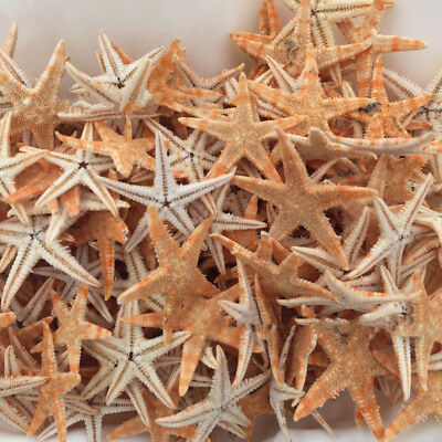 Landscape For Micro Stars Natural Hot Sea Party Starfish 20pcs Pool Crafts Home