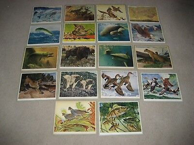 Lot Of 18 1940's House Of Seagram Wildlife Prints-Bob Kuhn,De Feo,Lawrence