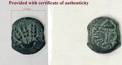 Genuine Rare Antique Judaica Coin of Israel Ancient Coin Herod Agrippa I - 37 AD