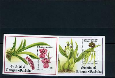 Barbuda 1993  Flowers Orchids  s/s(2)  Scott# 1467-8 mint LH