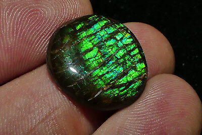 Quality Solid Canadian Ammolite/Epoxy coated with nice Colours/Pattern 2,51 Grm