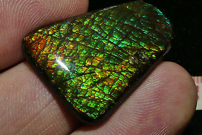 Quality Solid Canadian Ammolite/Epoxy coated with nice Colours/Pattern 5,55 Grm
