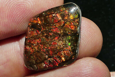 Quality Solid Canadian Ammolite/Epoxy coated with nice Colours/Pattern 3,86 Grm