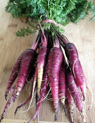 Certified Organic Seeds - Carrot (Purple Dragon)