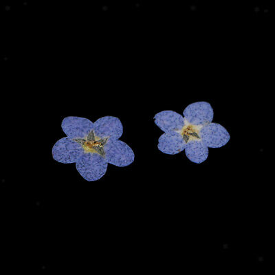 10x Pressed Natural Dried Flowers Forget Me Not for DIY Craft Scrapbooking