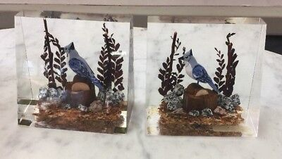 BLUE JAY pair Paperweight Vintage Carved Wood Bird in Solid Lucite Acrylic case