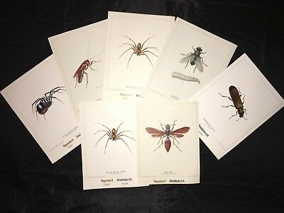 (6) 1969 Shell Chemical Company insect prints from originals by Andre Dureau