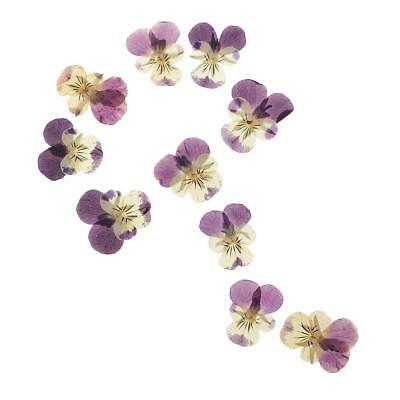 10PC Beautiful Pressed Pansy Flower Dried Flowers for Art Craft Scrapbooking