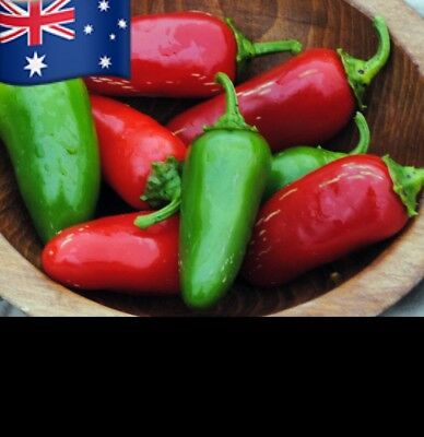 30+ Seeds Jalapeno Chilli Red Pepper Plant Vegetables Garden