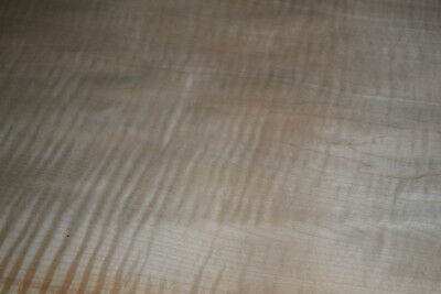 Curly Maple Raw Wood Veneer Sheets 13.25 x 30 inches 1/42nd               31837