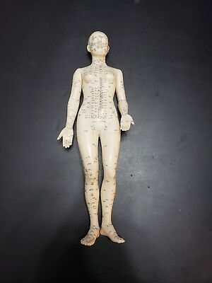 1pc 19'' Female Human Body Acupuncture Model - Pressure Point and Meridians
