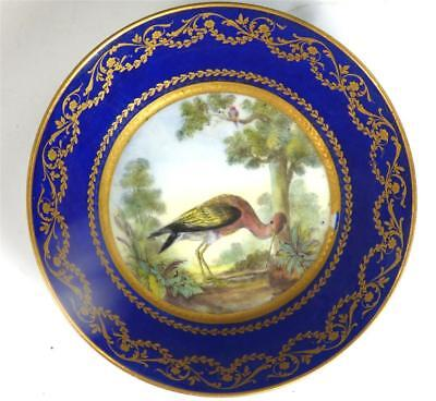 Fine Antique French Sevres / Sevres Style Porcelain Ornithological Saucer