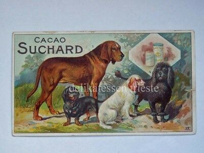 SUCHARD CACAO chocolate antica figurina lito cane dog bassotto Dachshund IX