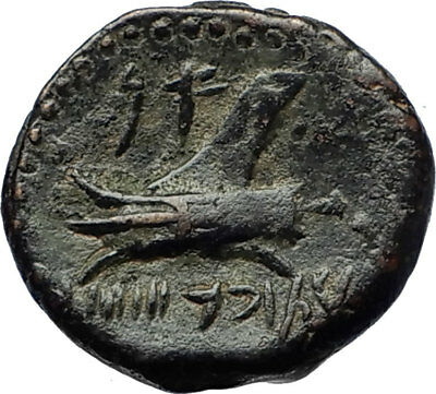 ARADOS in PHOENICIA Authentic Ancient 206BC Greek Coin w ZEUS & GALLEY i69704