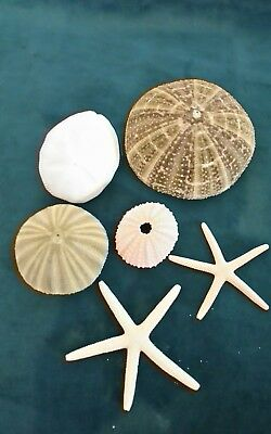 4 X REAL SEA URCHINS 4 TO 8Cm -  PLUS 2 STARFISH WHITE - MIX NATURAL DECOR