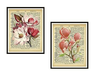 Set of 2 Vintage Ephemera Botanical Magnolia Art Prints Poster  8 x 10