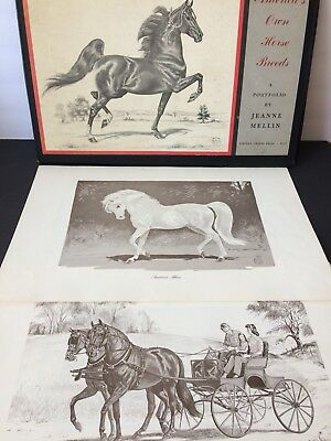 Jeanne Mellin America's Own Horse Breeds 1962 SATURDAY ONLY FREE SHIPPING!!!