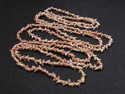 Long Strand Vintage Tasmanian Aboriginal Maireener Iridescent Shell Necklace