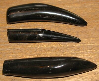 """3 """"whale Wars""""  Megalodon Attack Prey Miocene Fossil Tooth Teeth Shark Food"""